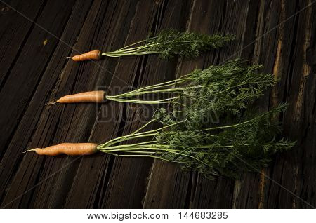 Composition of three carrots with green tops on a wooden background