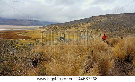 Parque Nacional Cotopaxi, Cotopaxi / Ecuador - September 20 2014: Lonely tourist hiking in the Cotopaxi National Park - Ecuador