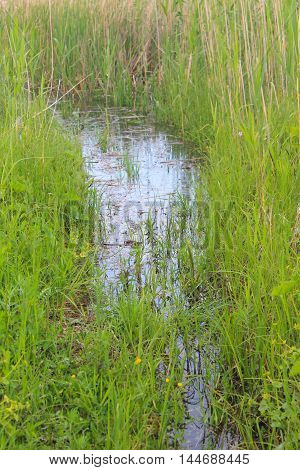 Marshland with green reeds in the water