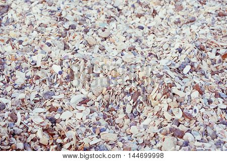 various small sea shells texture background surface