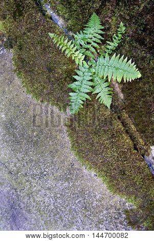 Ferns breaking through concrete structures background texture