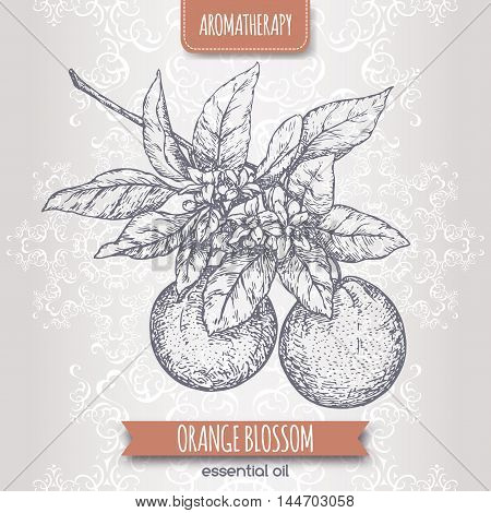 Orange blossom sketch on elegant lace background. Aromatherapy series. Great for traditional medicine, perfume design, cooking or gardening.