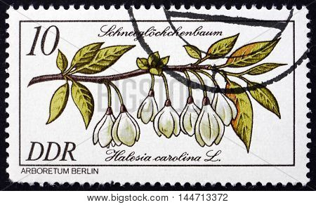 GERMANY - CIRCA 1981: a stamp printed in Germany shows Carolina Silverbell Halesia Carolina Flowering Plant circa 1981