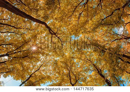 Trees Top In Autumn Forest
