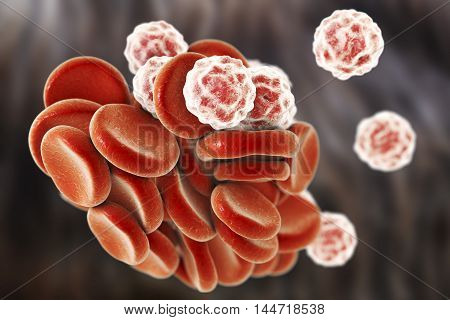 Blood cells: red blood cells erythrocytes and white blood cells leukocytes . 3D illustration
