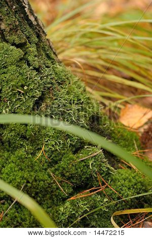 The close-up photo of the moss-grown tree