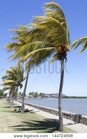 The row of palms in Lautoka the second largest city in Fiji.