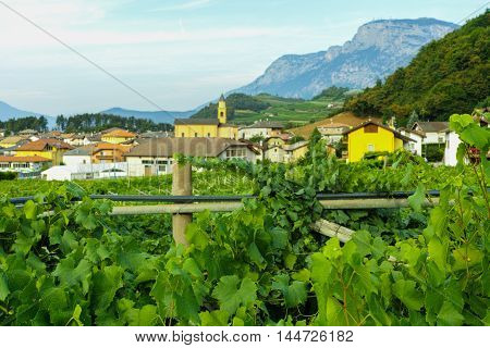 Trentino vineyards in the mountains, North Italy