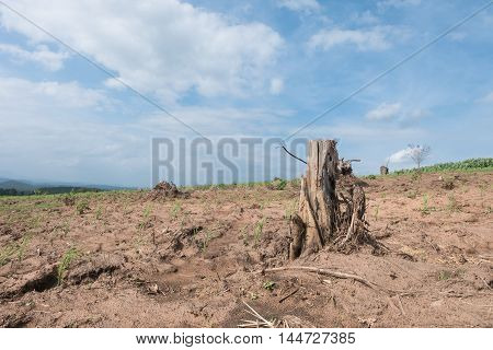 Tree Stump In Deforested Mountain Hill.