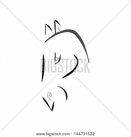 Horse drawing of lines on a white background vector