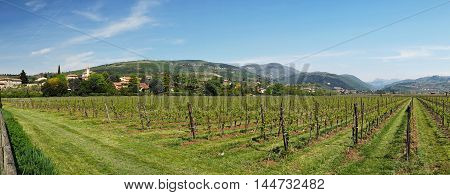 Veneto region wineyards near lake of Garda in Italia