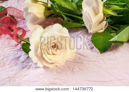 pink rose on a pink textured paper background. Romantic mood. One rose wrapped festive ribbon. Copy space