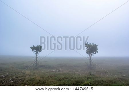 trees on a green glade in fog