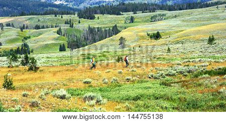 Two park rangers work spraying a field inside Yellowstone National Park.