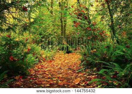 a picture of an exterior Pacific Northwest forest hiking trail in  fall