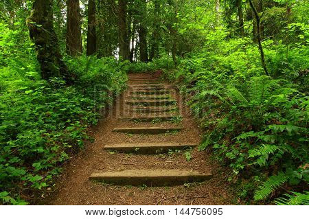 a picture of an exterior Pacific Northwest forest staircase  hiking trail