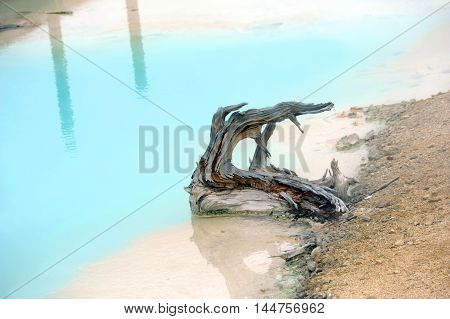 Broken tree sits in aqua water of Palette Springs in Norris Geyser Basin in Yellowstone National Park.