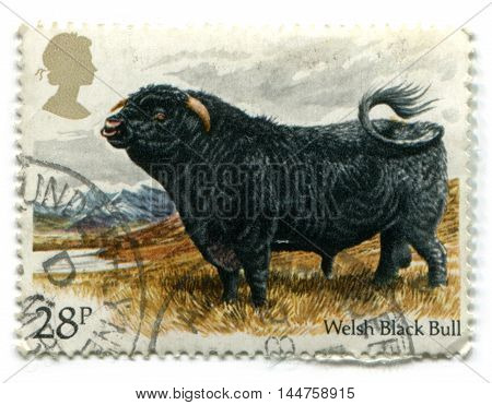 UNITED KINGDOM - CIRCA 1984: A British Used Postage Stamp showing a Welsh Black Bull circa 1984