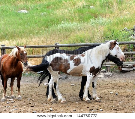 Full length image of a group of horses standing in a wooden enclose.