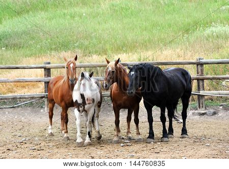 Group of horses in a wooden corral step towards the camera.