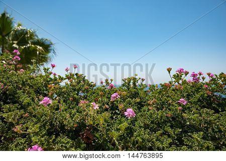 Spain. sea and nice flowers in summer