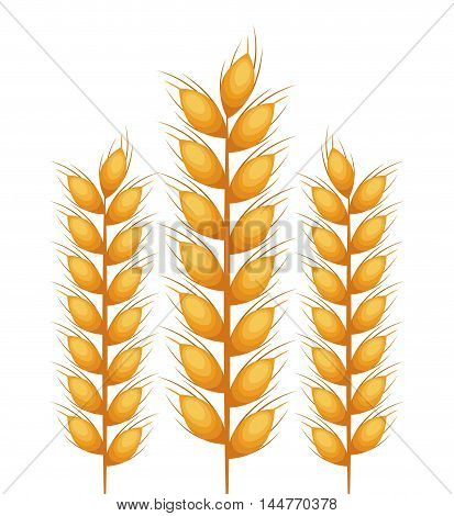 wreath spikes nature isolated icon vector illustration design