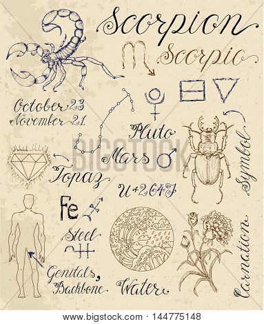 Collection of hand drawn symbols for astrological zodiac sign Scorpion or Scorpio. Line art vector illustration of engraved horoscope set. Doodle drawing and sketch with calligraphic lettering