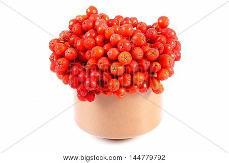 Bunch Of Red Autumn Rowan On White Background