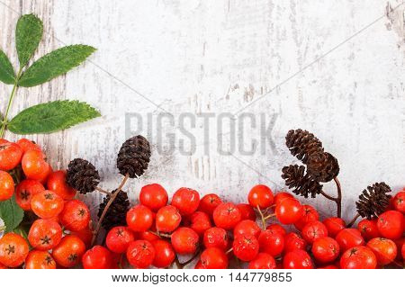 Red Rowan With Leaves And Alder Cone With Copy Space For Text