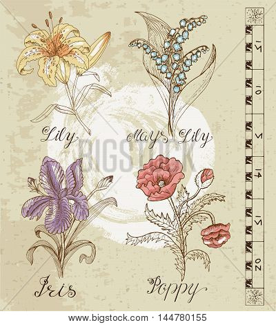 Old engraved illustration with Lily, May lily, Iris and Poppy on old paper texture. Set with line art vector flowers. Doodle drawing and sketch. Vintage graphic collection