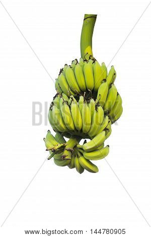Green bananas on a tree isolated on white