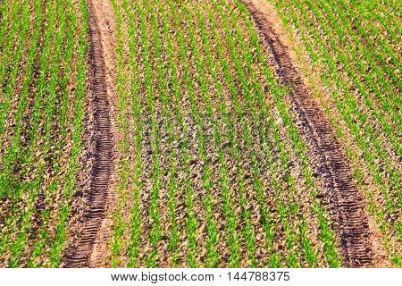Background of the farmer field.Rural landscape.Abstract background of rural fields during a harvest season.