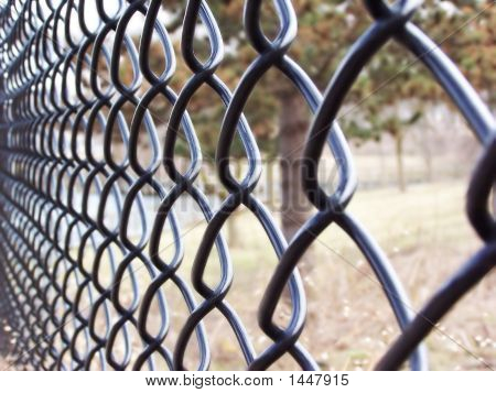 Looking Through The Fence..