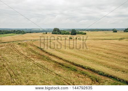 Lithuanian Wheat Field Before The Harvest Of Grain Yield