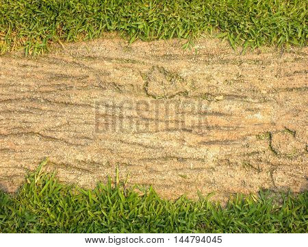 Pathway with natural green grass apply design textures and background.