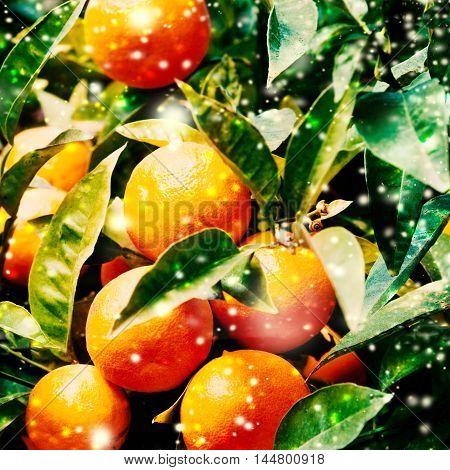 Christmas Mandarins Tangerines Close up fresh macro