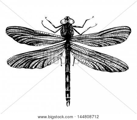Black hand drawn dragonfly on white background