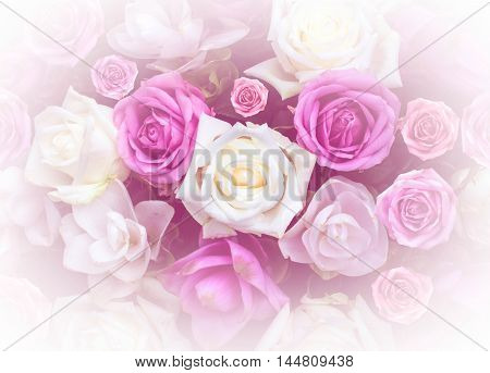 rose flower nature design love Valentines day for design background vintage light filter and color filter.