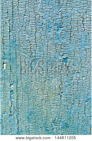 Texture of the old boards painted in blue color. Rotten boards in the paint.