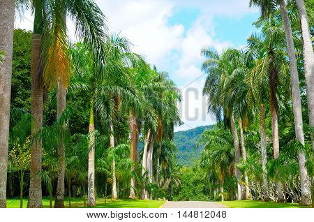 beautiful palm alley and blue cloudy sky