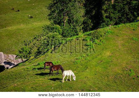 Horses grazing in Himalayas mountains. Kullu valley, Himachal Pradesh, India