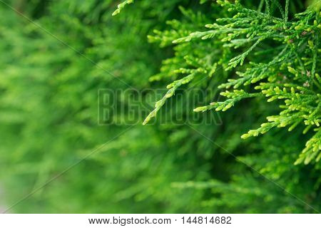 Green tree detail background