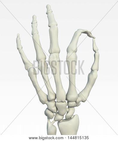 Skeleton Hand Making Ok Gesture