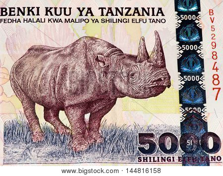 5000 Tanzanian shillings bank note. Tanzanian shilling is the national currency of Tanzania