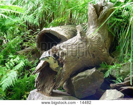 Goanna In Log