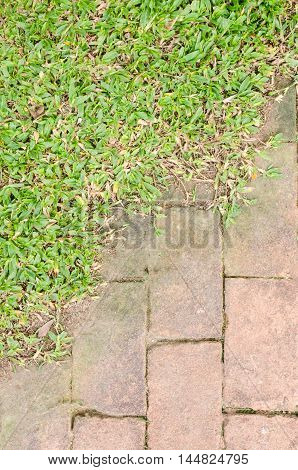 Bright  natural brick and the green grass background