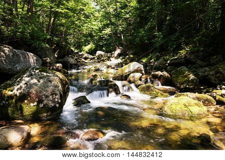 Mountain river with rapid current in the dense forest