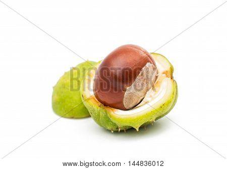 fruit chestnut  hippocastanum on a white background