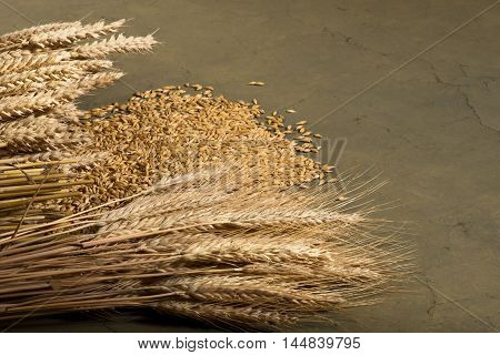 still life with barley and wheat in studio