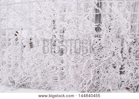 Fence With Hoarfrost